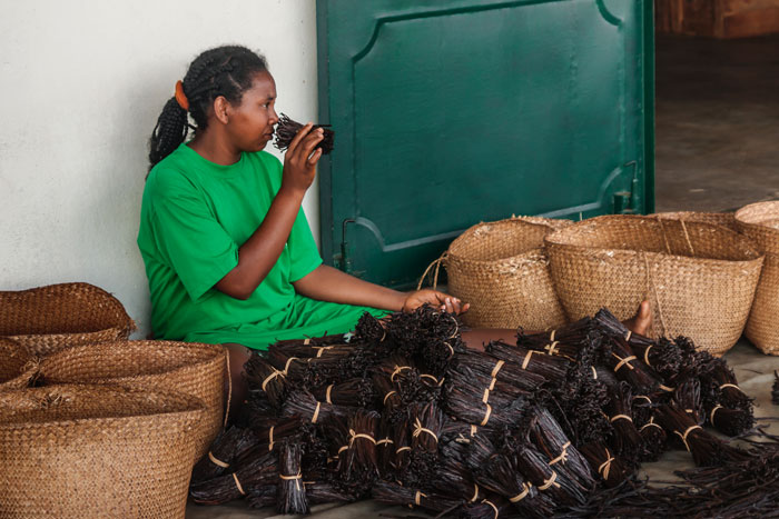 אישה מדגסקרית מריחה מקלות וניל ליד ערימות של מקלות