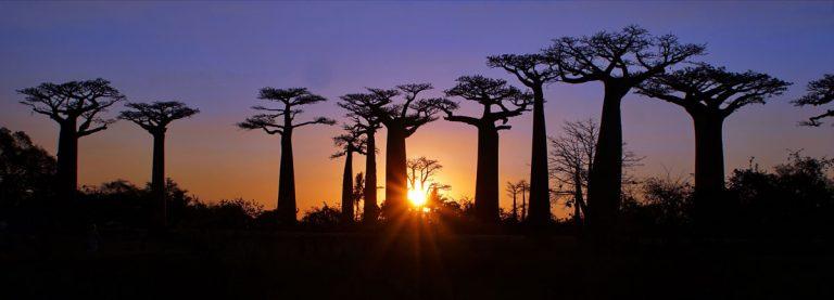 מדגסקר - אי הוניל